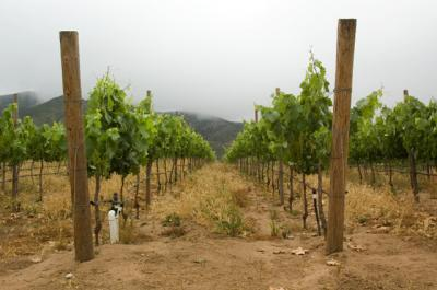 20071116205352-vinisterramini.jpg