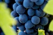 Curso de vinos en Queretaro