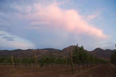 Las zonas vinicolas de Mexico