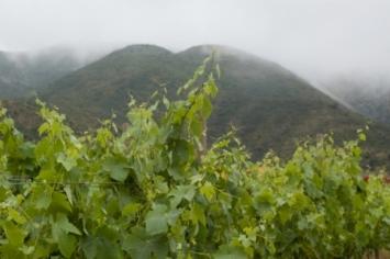 """Concurso """"Ensenada Tierra del Vino"""": confianza ganada"""