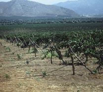 Valle de Guadalupe, tierra de vinos