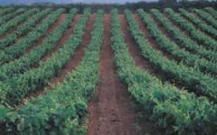 Los vinos mexicanos y sus vinicolas