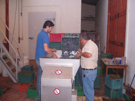 Descubre Bodegas y Viñedos San Rafael en Ensenada