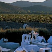 Asesoria para instalar un viñedo en Queretaro