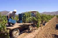 El consumo de vino en México va en aumento.