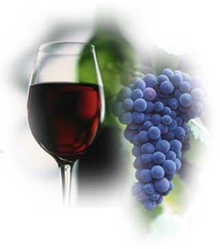 Descubre la vinicola mexicana Adobe Guadalupe