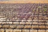 Las represalias de Mexico incluyen al vino de EU