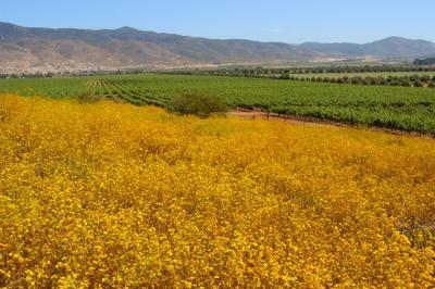 Intercambios sobre vinos mexicanos en España
