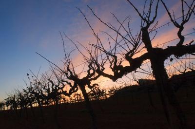 Encontrado en Twitter sobre vinos mexicanos